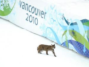 Olympic Lynx